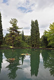 The pond and trees Royalty Free Stock Image