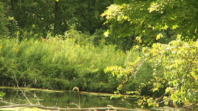 Pond and trees. Landscape. stock footage