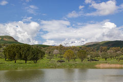 Pond, trees and mountain Royalty Free Stock Images