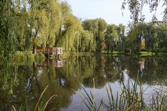 Pond and trees at the Orunia Park Royalty Free Stock Photos