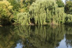 Pond and trees at the Orunia Park Royalty Free Stock Photo
