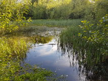 Pond with trees Stock Images