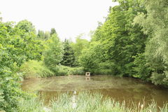 Pond with  trees Royalty Free Stock Photo