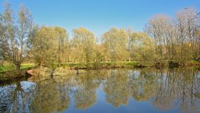 Pond with trees and their reflections in the waterin the Flemish countryside. Pond with  trees and their reflections in the water  on  a sunny day with clear Stock Photography