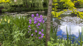 Pond, trees, and waterlilies in a french garden Royalty Free Stock Images