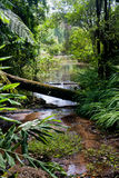 Pond in the Tropical Forest Royalty Free Stock Photos