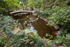 A pond in the Tropical Forest Royalty Free Stock Image