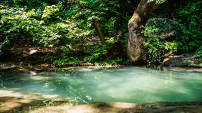 Pond in a tropical forest. Photo Royalty Free Stock Image