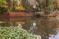 Pond. `Turtle` in Alexandria arboretum autumn Royalty Free Stock Photos