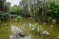 Pond in verdant early summer Stock Photos