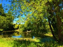 Pond. View of the pond overgrown with bushes Royalty Free Stock Photo