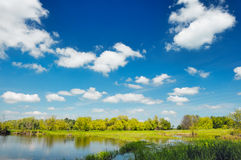 Pond wallpaper, Narew, Poland Royalty Free Stock Photos
