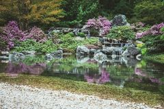 Pond in a blooming Japanese garden royalty free stock photography