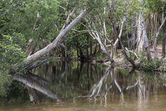 Pond water in the forest, Australia Royalty Free Stock Image