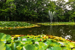 Pond with water lilies and fountain Stock Photography
