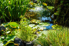 Pond with Water Lilies and Fountain Splashing Stock Photography