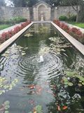 Pond with water lilies and goldfish in garden Royalty Free Stock Photography