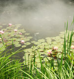 Pond with water lilies and mist Stock Photo