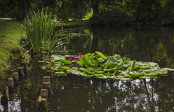 Pond with water lilies. And posts in two rows stock photo