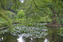 Pond with water lilies and turtles in the city botanical garden Royalty Free Stock Photography