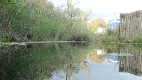 Pond with water. Mirror on a background of green reeds stock video