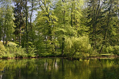 Pond with water reflection, Germany Royalty Free Stock Images