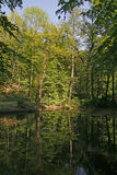 Pond with water reflection in Lower Saxony, German Stock Photography