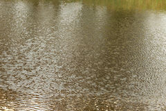 Pond water surface with small waves Stock Photo