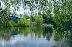 Pond water under a willow tree. Country pond. Pond water under a willow tree in spring time. Countryside nature landcape. Houses on lake shore Royalty Free Stock Images