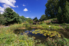 Pond with waterfall waterlily flowers in Oslo botanical garden Stock Image