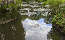 Pond and waterlilies in a  botanical garden Stock Photo