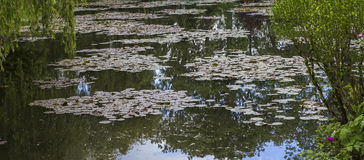 Pond and waterlilies in a  botanical garden Stock Photos