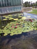 Pond with waterlillies stock photography