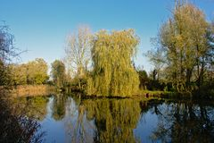 Pond with weeping willow and other trees in the Flemish countryside. Pond with weeping willow and other trees on  a sunny day with clear blue sky in the Flemish Royalty Free Stock Photo