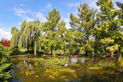 The pond, weeping willows and flower beds Royalty Free Stock Photography