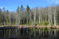 Pond in West Virginia Stock Photo