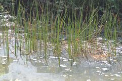Pond in wet land stock photo