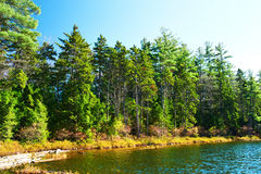 Pond in White Mountain National Forest, New Hampshire Stock Images