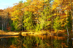 Pond in White Mountain National Forest, New Hampshire Stock Photography