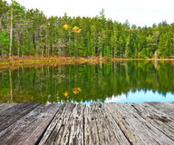 Pond in White Mountain National Forest, New Hampshire Royalty Free Stock Photo