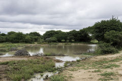 Pond in wild part of africa Royalty Free Stock Photo
