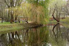 Pond with willow tree Stock Photography