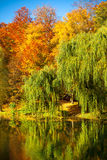 Pond with willow trees in park Royalty Free Stock Photos