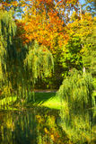 Pond with willow trees in park Stock Photography