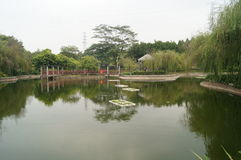The pond and willow Stock Image
