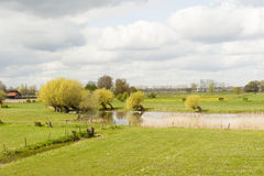 Pond with willows in rural landscape Royalty Free Stock Image