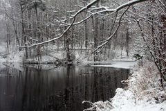 Pond In Winter. With Snow On Branches Stock Image