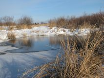 Pond in winter royalty free stock image