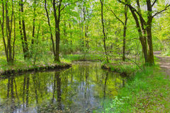 Pond in the woods. In autumn Stock Photos