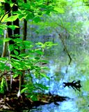 The Pond in the Woods. This image was captured in June, 2014, down my rural street located in southwest Michigan. Bright, spring foliage contrast with a pond stock photos